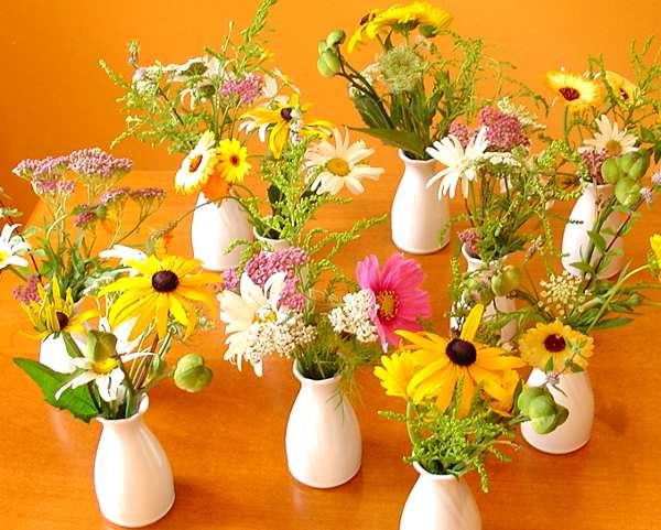 Welche Blumen Bluhen Im August Und September Hylen Maddawards Com